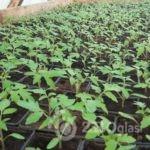 rasad-poljoprivredno