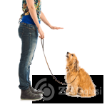 1.Dog-Traing-Now-2_1-54c3dff8
