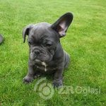 blue-boy-teddy-ready-to-his-forever-home-5d55d7c0af91f - Copy-ab8c92bf