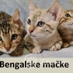 00_bengalske-macke-241d5288