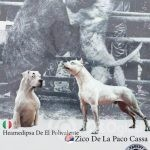 dogo argentino 02-5d57b8a7