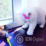 british_cats_tanyahouse-___CEGleZXKOVM___--a59cfe2a