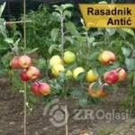 001_rasadnik-antic_jesenje-e1182495