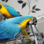 blue-and-gold-macaw-5dc06deebb3d0-4cbbc170
