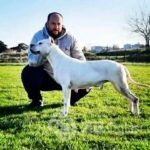 dogo argentino 02-509a440d