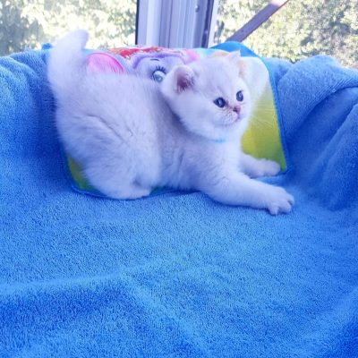 british_cats_tanyahouse-___CED5F4XqEYF___--4d114163